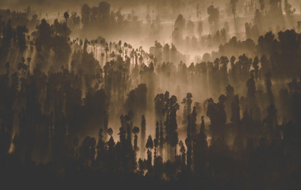 art-dark-forest-795693